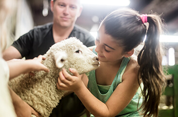 Agrodome Sheep Show and Farm Tour Experience