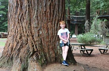 The Redwoods – Whakarewarewa Forest
