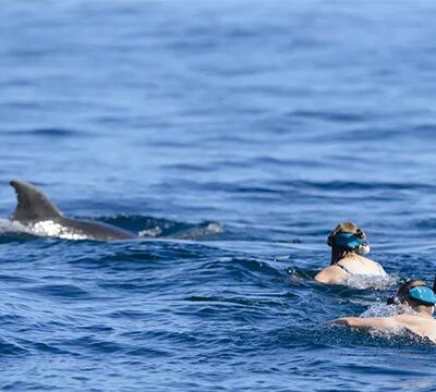 Fuller's GreatSights Dolphin Eco Experience