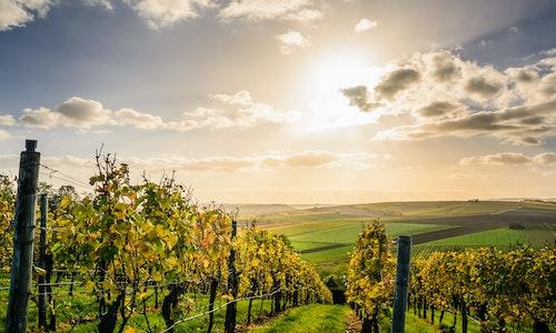 Kerikeri Wine Trails