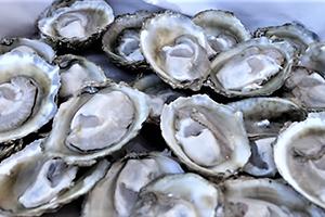 Taste a Bluff Oyster