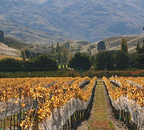 Winery Tours and Wine Tasting